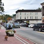 Lake Placid  New York - Main Street Commercial Area -- Wild Fox  Walking thumbnail