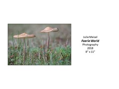 """Faerie World • <a style=""""font-size:0.8em;"""" href=""""https://www.flickr.com/photos/124378531@N04/32775068708/"""" target=""""_blank"""">View on Flickr</a>"""