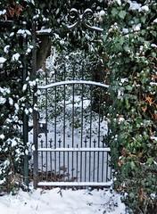 Closed snowy HFF (wilma HW61) Tags: hff fence recinto clôture zaun sneeuw snow winter vinter hiver inverno struik haag hedge hedgerow netherlands niederlande nederland holland holanda hattem gelderland veluwe paysbas paesibassi paísesbajos outdoor wilmahw61 wilmawesterhoud europa europe fencedfriday happyfencedfriday