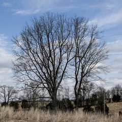 Trees, Perryville Battlefield 3/14/19 #kentucky #civilwar (Sharon Mollerus) Tags: cfptig19 kentucky civilwar