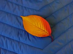 DSC08421 (McMunich) Tags: mcmunich münchen rot red simple minimalistic elegant catchy stylish cool leaves blau blue