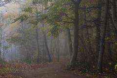 Sometimes nature is looking like a painting (katrin glaesmann) Tags: timmendorferstrand ostsee schleswigholstein balticsea bayoflübeck lübeckerbucht sleswickholsatia derechtenorden therealnorth brodtenerufer brodtenersteilufer fog nebel wald woods trees autumn