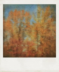 An autumn story. (jeanne.marie.) Tags: sky blue orange abstract blur mydailywalk words story golden polaroid treescape trees iphoneography iphone7plus autumn