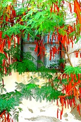 Window and flowers (Marite2007) Tags: greece dodecanese rhodes kremasti islands architecture facade window curtains plants flowers green red colours colorful frame