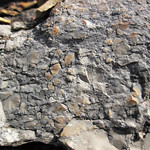 Intraclastic limestone (Mill Knob Member, Slade Formation, Upper Mississippian; Clack Mountain Road Outcrop, south of Morehead, Kentucky, USA) 5 thumbnail