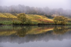 *Moselle @ November Blues* (Albert Wirtz @ Landscape and Nature Photography) Tags: albertwirtz zell merl mosel moselle river reflection spiegelung nature natur natura landscape paesaggi paysage campagne campagna campo paisaje rheinlandpfalz rhinelandpalatinate germany allemagne deutschland foggy neblig trübmist fog nebbia laniebla brume bruma brouillard mist misty moseltal weinbau weinberg riesling moselsteig mosellevalley moselletrail nikon d810 november herbst autumn fall autunno novemberblues vineyard wine
