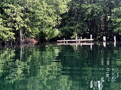 Paradise in Ko Kut Island (Koh Kood) - the beautiful scenery of mangrove jungle (abandoned wooden pier) in Klong Chao Canal, Ko Kut Island (Koh Kood). (baddoguy) Tags: thailand trat kohkood kokut mangrove wood forest pier dock destroyed abandoned reflection tree