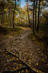 Forest path (Koelman2008) Tags: forest path landscape trees tree fall colours red green orange yellow leafs netherlands dutch photography photo canon eos 80d walking hiking hike november nederland bos bossen kaapse utrecht heuvelrug