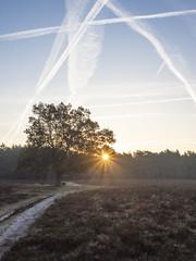 Bussumerheide 2018: Sparkle (mdiepraam) Tags: bussumerheide 2018 bussum westerheide heath earlymorning dawn sunrise tree branch heather backlight sky contrails