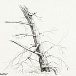 Study of a tree (1816) by Jean Bernard (1775-1883). Original from the Rijks Museum. Digitally enhanced by rawpixel. thumbnail