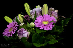 Bouquet (Geert E) Tags: flowers pink bouquet black background