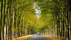 - Autumn 2018 - (Jacqueline ter Haar) Tags: autumn herfst fall 2018 ellecom gelderland straat street road veluwezoom