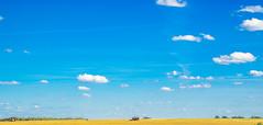 Harvest Season (IronBokeh) Tags: minsk belarus landscape field nature summer autumn green sky blue yellow clouds white midday machinery harvest