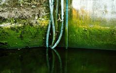 Cáblaí (Rhisiart Hincks) Tags: зеленый 绿 gwer zaļš glas green žalias verde gwyrdd 緑色 berde vert uaine verd zöld أخضر ירוק afon ibai river stêr abhainn éire èirinn iwerzhon ireland iwerddon ирландия iwerdhon irsko ιρλανδία water eau uisce uisge dŵr dour ur corc cork corcaigh briciau bricks llysnafedd slime sram réama