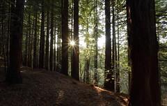 © Serie Otoño 2018 (Jesus Portal) Tags: 2018 6d angular canon color filtro natural paisaje serie tonos 1740 otoño hojas polarizador montaña bosque hayedo ramas cantabria parque árbol hierba