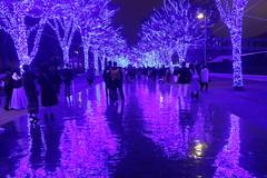 Christmas Lights in Shibuya (seiji2012) Tags: 東京 夜景 渋谷 青の洞窟 イルミネーション 反射 光 tokyo shibuya illuminate light night reflection happyplanet