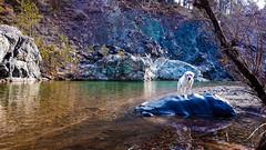 Aoos River, Vovousa - Valia Calda (deppy_kar) Tags: aoos aoosriver river dog water nature rock vovousa ioannina zagori epirus samsunga5 samsung landscape αωοσ βοβουσα ιωαννινα βαλιακαλντα ηπειροσ greece greek animal macedoniagreece makedonia macedoniatimeless macedonian macédoine mazedonien μακεδονια