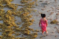 Corpus Christi - Exploration (Drriss & Marrionn) Tags: corpuschristitx texas usa water sea bay ocean coast coastline people beach waterfront child children kid kids padreisland