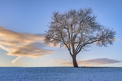 *winter tree* (Albert Wirtz @ Landscape and Nature Photography) Tags: albertwirtz tree goldenhour goldenestunde sunrise sonnenaufgang snow schnee nature natur landscape paesaggi paysage campo campagne campagna wintermagic winterzauber moseleifel bergweiler wittlichland wittlicherland eifel eifelsteig eifeltrail wiese meadow birnbaum nikon d810 raureif hoarfrost frost cloud wolke wintertree winterbaum paisaje germany deutschland allemagne rheinlandpfalz rhinelandpalatinate