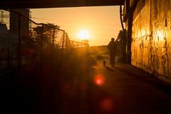 PB039229 The sunset (soyokazeojisan) Tags: japan osaka city street people dog light digital olympus em1markⅱ 12100mm 2018