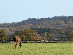 Autumn (ART NAHPRO) Tags: horse meadow field fence sheep sussex autumn sunny day 2018 november