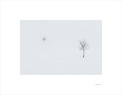 Las formas del invierno (E. Pardo) Tags: invierno winter árboles trees bäume schnee nieve snow formas formen forms steiermark austria