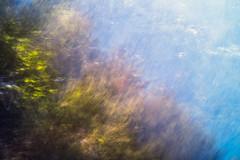 Trees (SopheNic (DavidSenaPhoto)) Tags: fujinon35mmf14 trees xe1 intentionalcameramovement fuji sky impressionisticphotography icm abstract fujifilm impressionism
