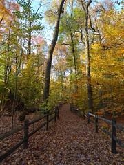 DSC05263b (Naturecamhd) Tags: dschx90v hx90v newyorkbotanicalgarden nybg botanicalgarden nature bronx green eco sonyhx90v thebronx sonydschx90v fall fallfoliage autumn forest fallcolors autumnleaves path trail nativeforest