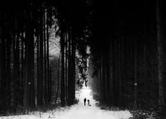 snowy walk (matwolf) Tags: snow walk snowy winter woods wood forest foret danslaforet neige noiretblanc noiretlblanc noirblanc negroyblanco blancoynegro blackandwhite blackwhite