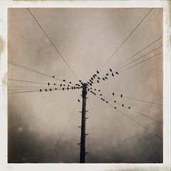 Birds on a wire (davewilkinson5) Tags: hipstamatic johns uchitel20 hipstaoftheday photooftheday iphoneonly abstract animals blackandwhite bw landscapes monochromatic nature