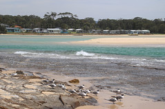 Dolphin Point, Burrill Lake (RossCunningham183) Tags: burrilllake australia lake water sea ocean beach crestedterns tern rip ripcurrent current holidaypark caravanpark cabins nsw dolphinpoint tide