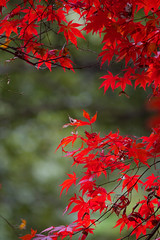 PC013796 (kunmorita) Tags: 白馬渓 臼杵市 臼杵 usuki