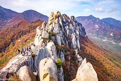 Ulsanbawi Rock during autumn (patuffel) Tags: ulsanbawi rock course south kore leica m10 summicron 28mm 20 2018 foliage autumn red leaf leafes korea national park seoraksan forest mountain