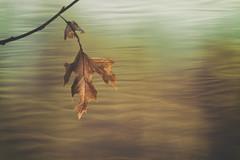 Souvenir d'automne.. (chana4 ( Nancy Charlton)) Tags: nature bokeh automne superposition feuille exterieur leaf