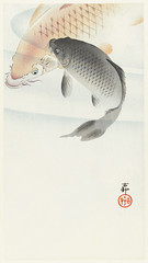 Two carp (1900 - 1930) by Ohara Koson (1877-1945). Original from The Rijksmuseum. Digitally enhanced by rawpixel. (Free Public Domain Illustrations by rawpixel) Tags: pdproject21batch2x otherkeywords tagcc0 animal antique art asian carp drawing fish illustration japan japanese koson marinelife museum name ohara oharakoson old paint rijksmuseum vintage