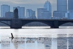 Longfellow Bridge (AntyDiluvian) Tags: boston massachusetts cambridge river charlesriver bridge longfellowbridge saltandpeppershakerbridge skyline