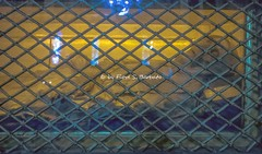 Imola (BO), 2018, Santuario della Beata Vergine del Piratello. Il corpo del Beato Lambertenghi. (Fiore S. Barbato) Tags: italy emilia romagna emiliaromagna imola santuario chiesa beata vergine piratello convento cimitero beato lambertenghi corpo reliquia