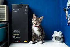 Leica DG 200mm f/2.8|Panasonic (里卡豆) Tags: 東區 嘉義縣 臺灣 tw panasonic leica dg 200mm f28 panasonicleicadg200mmf28 leicadg