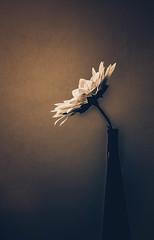 Natura Morta (armandocapochiani) Tags: minimal minimalism minimalist nature naturalistica painting flower vase stilllife