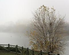 Remando. Rowning (marisabosqued) Tags: niebla fog río river canoas canoes ebro tamronafsp1750mm snapseed