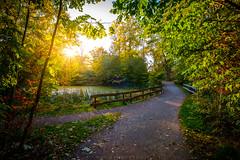 Autumn walk in the park (dannygreyton) Tags: autumn fall pond forest fujifilmxt2 fujifilm fujinon1024mm fujifilmxseries sunset sweden trees sunrays park walk path malmo
