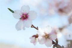 s/t (jjglez) Tags: año2019 enero flora tejeda