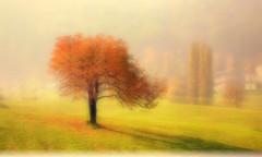 * San Martino * (argia world 1) Tags: autunno autumn nebbia fog vento wind foschia mist erba grass leaves foglie pioppi poplarstrees foresta forest collina hill argiagranuzzo ombra shadow sole sun sanmartino poesia poem giosuècarducci