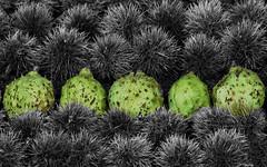 i have no idea (dotintime) Tags: no idea unknown mystery odd weird puzzle green botany row five dotintime meganlane
