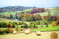 Barley bales. (artanglerPD) Tags: bales fields trees autumn colours