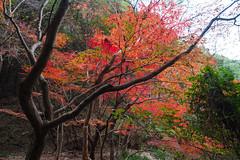 PC013700 (kunmorita) Tags: 白馬渓 臼杵市 臼杵 usuki