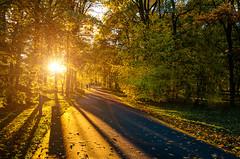 Sunny evening (Shumilinus) Tags: 2018 nikond300s landscape sunset sunbeam park trees evening sidewalk people shadows