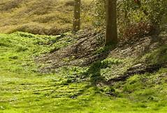 Spring Greens! (Sandi - (Very Busy Lady!)) Tags: mar19 versatile cc
