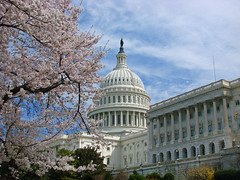 The Washigton D.C. Cherry Blossom Festival (Sun~Lover) Tags: captiol washingtondc cherryblossomfestival march april spring japanesecherrytrees pink white blooms blossoms explore 2019