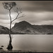 One just had to take this one 2 (Renton Lad) Tags: nikond850 nikkor2470mmf28 landscape lakedistrict buttermere longexposure bw blackandwhite lake lonelytree